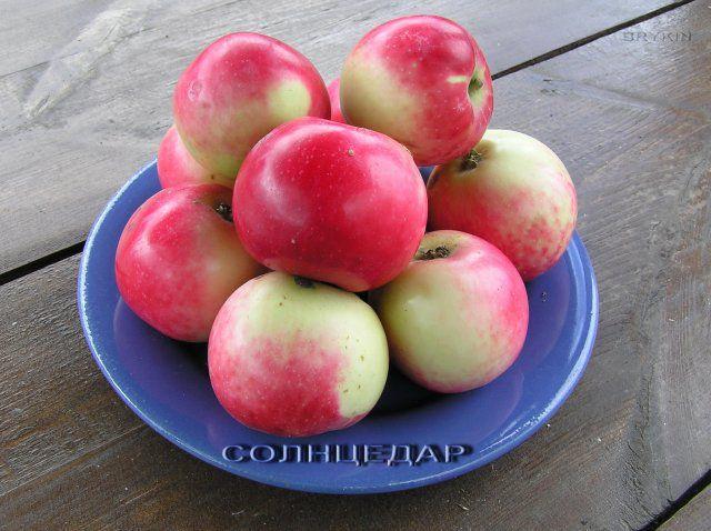 яблоня солнцедар фото описание