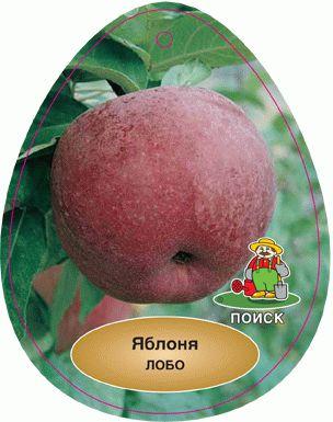 лобо яблоня фото и описание