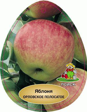 орловская полосатая яблоня описание фото отзывы