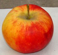 фото яблоня алтайское десертное
