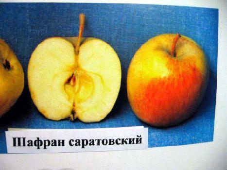 яблоки шафран фото